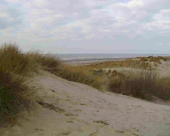 Dunes035.jpg